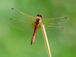 dragonfly-177338_640
