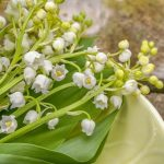 lily-of-the-valley-5083800_640