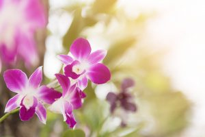 orchid-2721756_1280